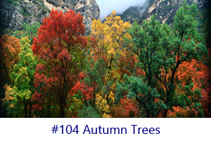 Autumn Trees Screen Image