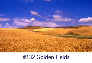 Golden Fields Screen Image