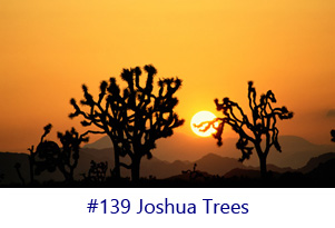 Joshua Trees Screen Image