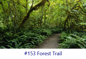 Forest Trail Screen Image