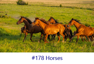 Horses Screen Image